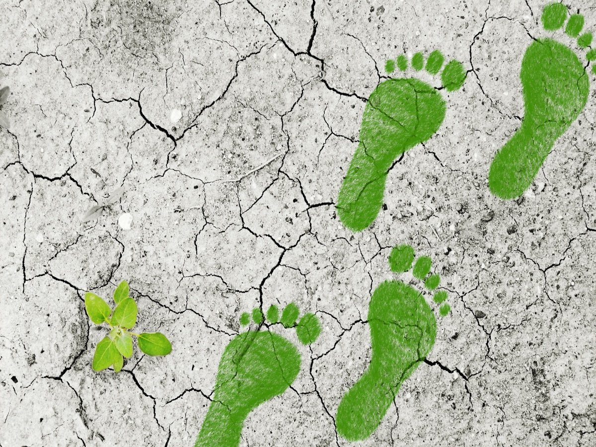 Read more about the article Check Your Carbon Footprint