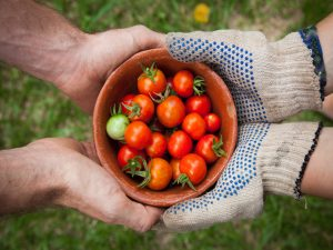 Read more about the article Food Growing at Home