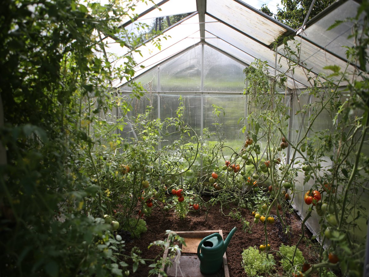 You are currently viewing Grow Food at Home